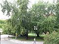 044 Náměstí Míru, park.JPG