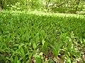 14.05.2006 - територія заказника Чернечий ліс (5).jpg