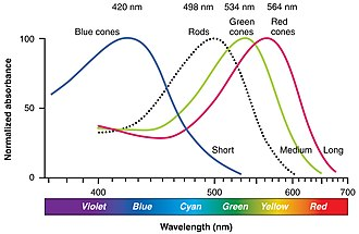 Photoreceptor cell - Normalized human photoreceptor absorbances for different wavelengths of light