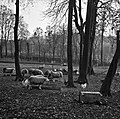 1960 Ovins au CNRZ Cliché Jean-Joseph weber-2.jpg