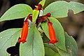 2011-03-05 03-13 Madeira 208 Monte, Jardim tropical Monte Palace.jpg