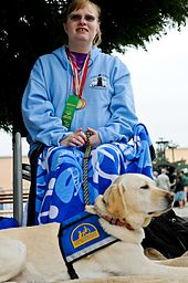 A Yellow Labrador Service Dog in a blue service dog vest with a yellow Logo lies in the foreground of the photograph. A woman sits behind him, in a wheelchair, with a blue shirt, long flowing skirt, sunglasses, and has an award medal hanging around her neck.