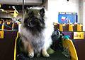 2014 Westminster Kennel Club Dog Show (12451637615).jpg
