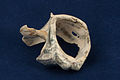 20150223 1928 WMAT Gastropoda shell 0956.jpg