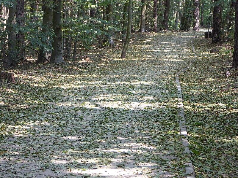 File:20150811 xl P1020015 Strausberg Trockenheit im August-die Blaetter fallen--Im Wald des Wohngebietes Hegermuehle.JPG