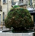 2016-05-10-175318 - Fontaine moussue de Saint-Anne.jpg