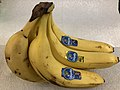 2019-02-07 13 27 44 A bunch of six Chiquita bananas in the Franklin Farm section of Oak Hill, Fairfax County, Virginia.jpg