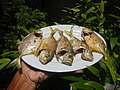 3412Fried fish in the Philippines 21.jpg