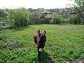 5551 Brestovo, Bulgaria - panoramio (1).jpg