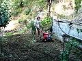 A@a Kyproulas Askas garden cy - panoramio.jpg