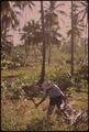 A FARMER CLEARS HIS LAND WITH A MACHETE - NARA - 546383.tif