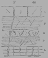 A Treatise on Geology, figure 46.png