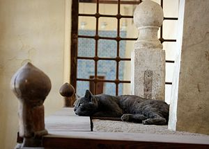 Aqsunqur Mosque - A cat sleeping on Aq Sunqur Shrine in the Blue mosque in Cairo, Photo By: Ahmed Hamed