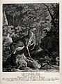 A stag with abnormal colouring in its fur. Etching by J.E. R Wellcome V0021020.jpg