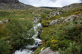 A waterfall on Afon Lloer - geograph.org.uk - 1462759.jpg