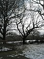 A winter scene in the grounds of Guildford Cathedral - geograph.org.uk - 1153784.jpg