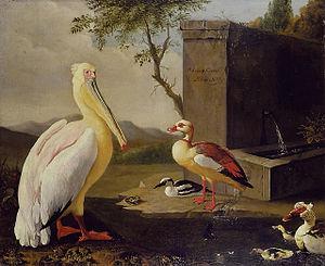 "Timeline of ornithology -  ""Oriental Birds"" Adriaen Coorte, 1683"