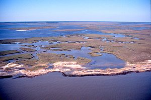 Grand Bay National Estuarine Research Reserve - Image: Aerial view of Grand Bay National Estuarine Research Reserve