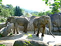 African Elephants in Taipei Zoo 11-12-2007.JPG
