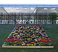 Airport flower bed - geograph.org.uk - 763754.jpg