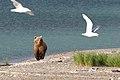 AlaskanBear.jpg