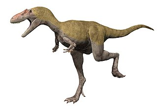 1905 in paleontology - Albertosaurus