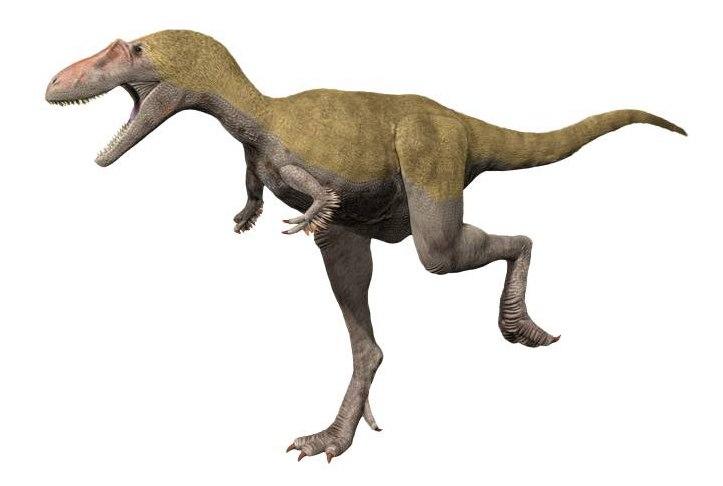 Albertosaurus NT small