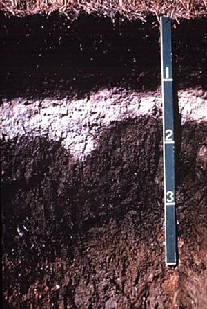 Soil horizon - Albeluvisol – dark surface horizon on a bleached subsurface horizon (an albic horizon) that tongues into a clay illuviation (Bt) horizon