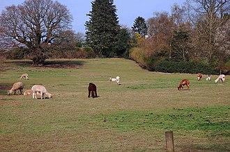 Trimpley - Image: Alpacas at Trimpley, Worcs (geograph 3909988)
