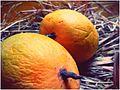 Alphanso (Haapus) Mango 2.jpg