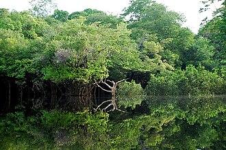 Indirect land use change impacts of biofuels - Amazon rainforest.