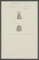 Amphinome carunculata - - Print - Iconographia Zoologica - Special Collections University of Amsterdam - UBAINV0274 102 03 0008.tif