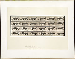 Animal locomotion. Plate 718 (Boston Public Library).jpg