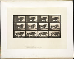 Animal locomotion. Plate 722 (Boston Public Library).jpg