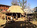 Animal shed.jpg