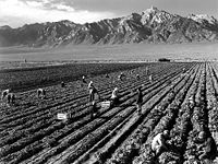 Farm workers at Manzanar War Relocation Center with Mt. Williamson in the background.