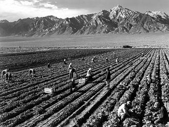 Ansel Adams - Farm, farm workers, Mt. Williamson in background, Manzanar Relocation Center, California.