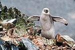 Antarctic Majesty (24914224936).jpg