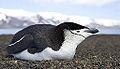 Antarctica (15235504523).jpg