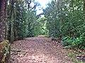 Antiga Estrada Jacarepagua X Grajau - panoramio.jpg