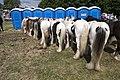 Appleby Horse Fair (8990119617).jpg