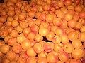 Apricots - CIMG1573.jpg