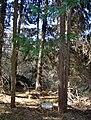 Arborétum Felaťa5.JPG