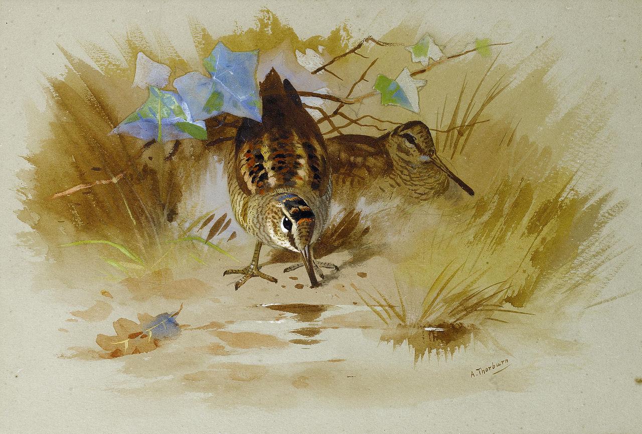 Арчибальд Торберн Вальдшнеп в песчаной лощине.