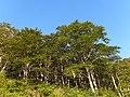 Arimine, Toyama, Toyama Prefecture 930-1458, Japan - panoramio (12).jpg