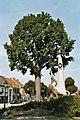 Assenede Bassevelde Dorp zonder nummer Herdenkingsbomen - 123315 - onroerenderfgoed.jpg