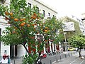 Athens - panoramio (3).jpg