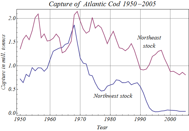 Atlantic cod capture 1950 2005