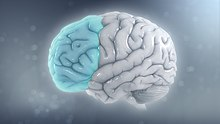 Adhd Real Brain Disorder Or Further >> Attention Deficit Hyperactivity Disorder Wikipedia