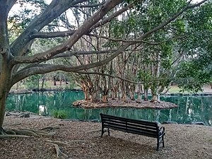 Auburn Botanical Garden lake.jpg